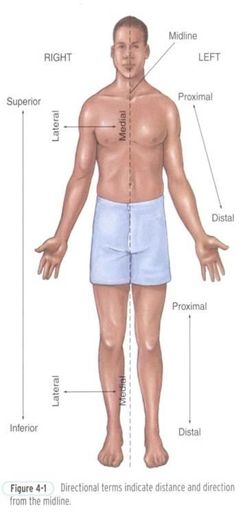 دانلود پاورپوینت آناتومی بدن انسان